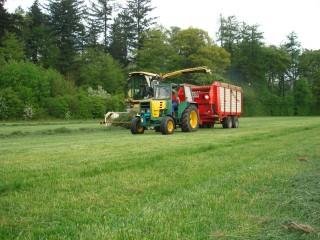 Gras silieren